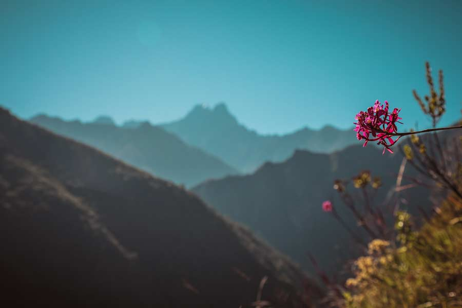 Orchid and mountains