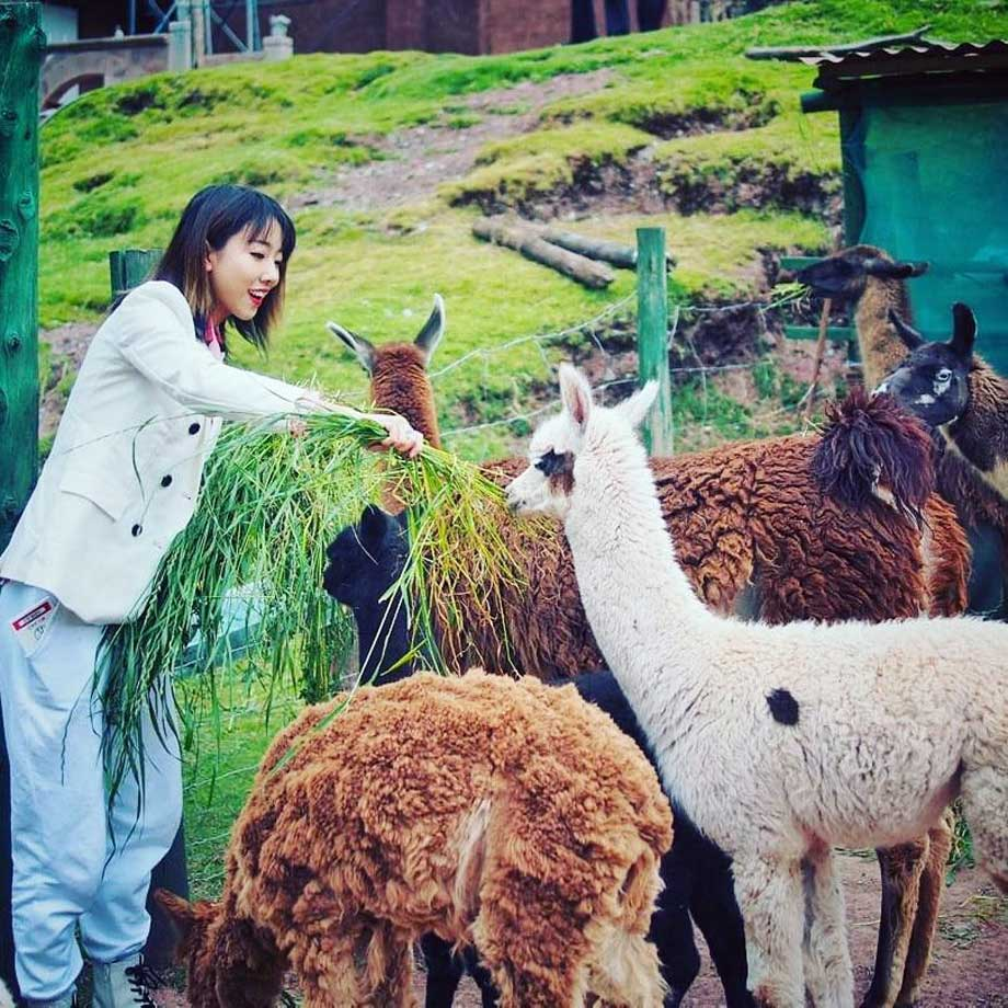 Fauna sanctuary animals andean paddington bear alpacas llamas