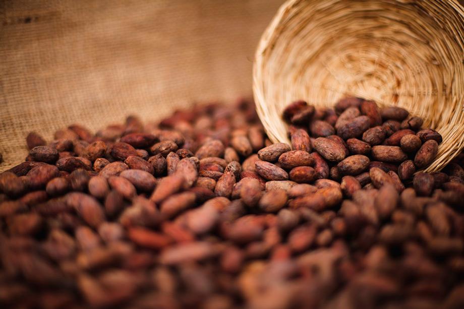 Cacao, chocolate, peruvian super food.