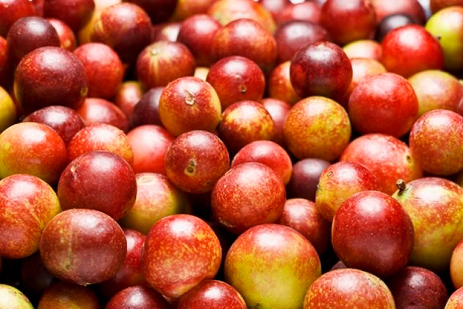 Camu camu is a peruvian super food,   agraria.pe