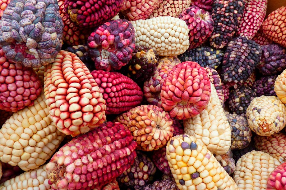 Corn, LoggaWiggler en Pixabay