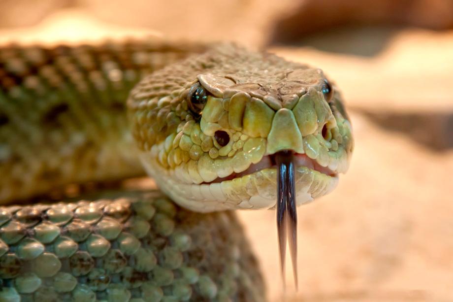 Snake, spiritual importance in peruvian history