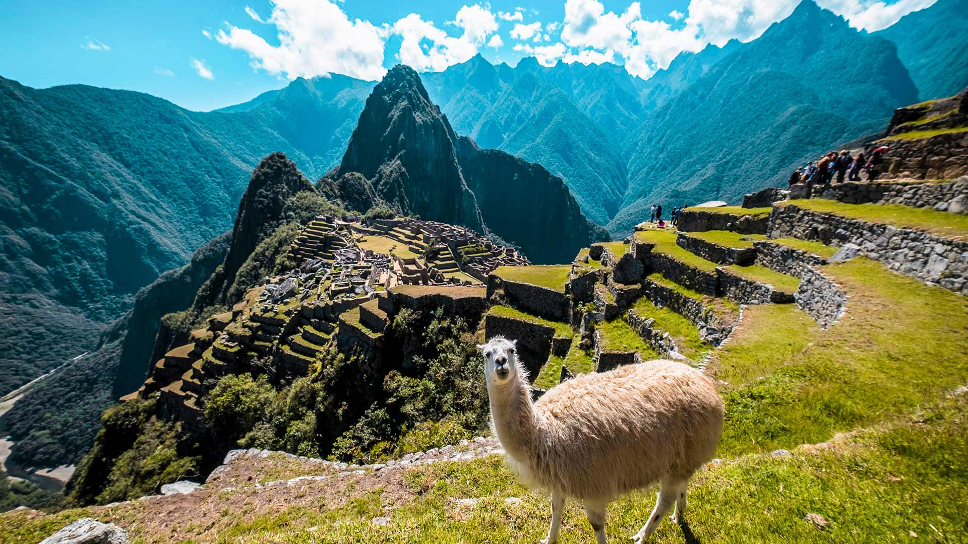 Panoramic photo of the archaeological site of Machu Picchu and a alpaca